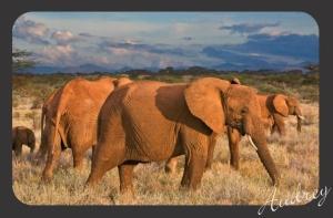 Gajah - Elephant